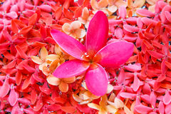 Pink spa with background rad flower Stock Photo
