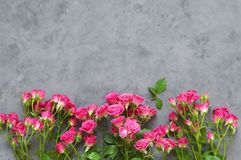 Pink roses on grey. Pink spray roses on dark grey background. Top view point Royalty Free Stock Photography