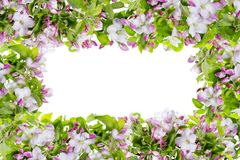 Pink spring apple tree flowers frame Stock Image