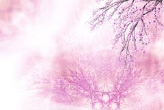Pink spring background Royalty Free Stock Image