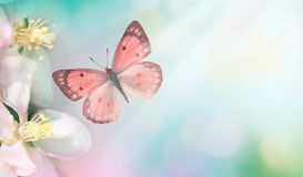 Pink spring background. Blooming tree flower with fly butterfly. Space for text. Panoramic view stock photo