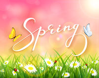 Pink spring background with grass and flowers. Lettering Spring with pink sunny natural background, butterflies flying above the grass with ladybugs and flowers Stock Image