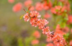 Pink spring blossom stock photos