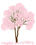 Pink spring blossoming tree isolated on white Royalty Free Stock Photos