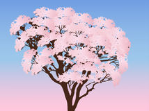 Pink spring blossoming tree on light background Stock Photos