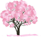 Pink spring blossoming tree on white. Illustration with pink blossoming tree  on white background Stock Photo