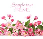 Pink spring flower border Royalty Free Stock Image