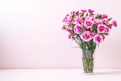 Pink spring flower on wood background. With copy space royalty free stock photos
