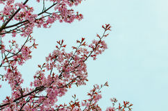 Pink spring flowers royalty free stock photos