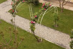 Pink spring flowers training over a trellis. Pink spring flowers training over an arched arbour or trellis over a garden path in a neat green lawn viewed from Stock Photos