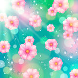 Pink spring flowers and water drops Royalty Free Stock Photo