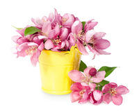 Pink spring flowers in yellow pail Stock Photography