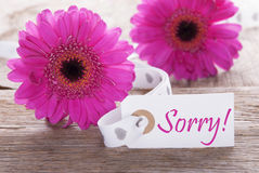 Pink Spring Gerbera, Label, Text Sorry. Label With English Text Sorry. Pink Spring Gerbera Blossom. Vintage, Rutic Or Aged Wooden Background. Card For Spring stock images
