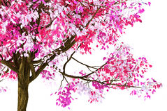 Pink spring tree Stock Images