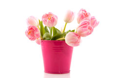 Pink spring tulips Royalty Free Stock Photos