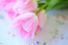 Pink spring tulips on floral print Stock Photos
