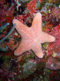 Pink starfish stock photos