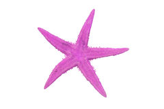 Pink starfish. On a white background Royalty Free Stock Images