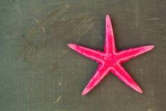 Pink starfish on a blackboard Royalty Free Stock Photography
