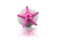 Pink starfish and pebble Stock Images
