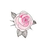 pink 2 steg Royaltyfri Bild