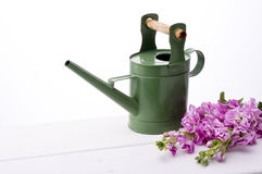 Pink stock flower. And watering can Stock Photography