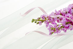Pink stock flower and ribbon. Stock flower and ribbon on light chiffon cloth Royalty Free Stock Photo