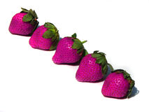 Pink Strawberries. Farm fresh pink strawberries on a white surface Royalty Free Stock Photography