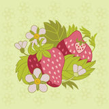 Pink strawberry. Flowers and leaves on pale green background Stock Photos