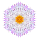 Pink Strawflower Flower Kaleidoscope Isolated on White Royalty Free Stock Image