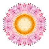Pink Strawflower Flower Kaleidoscope Isolated on White Royalty Free Stock Photos