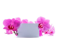 Pink stripy phalaenopsis orchid Stock Photography
