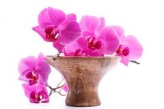Pink stripy phalaenopsis orchid Stock Photo