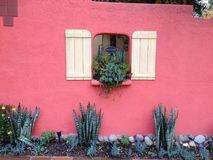 Pink stucco wall with succulents Royalty Free Stock Photos