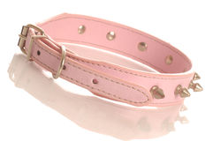 Pink studded dog collar royalty free stock images
