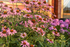 Pink summer flowers. On a background of the windows of a country cottage home, lit by the morning sun stock photos