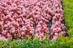 Pink summer garden flowers Stock Photos