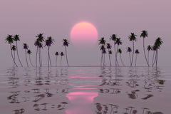 Pink sun over island. Pink sun over tropical coconut island sunset Stock Image