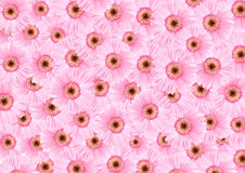 Pink sunflower floras textured background Stock Images