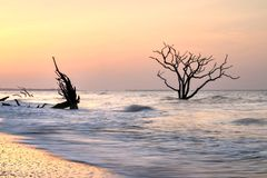Pink Sunrise At Botany Bay Boneyard South Carolina Coast Stock Photos