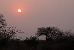 Pink sunrise Stock Photography