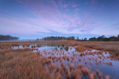 Pink sunrise over forest swamp Stock Image