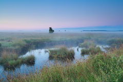 Pink sunrise over swamps in summer Stock Images
