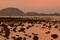 Pink sunrise sky reflected in rocky water shore, solitary man using binoculars, low tide Bahia Los Angeles, Baja, Mexico. Pink sunrise sky reflected in rocky stock image
