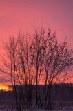 Pink sunrise Stock Photos