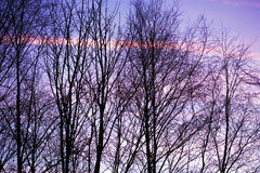 sunset and trees. Pink clouds behind winter trees at sunset Stock Photo
