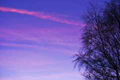 Pink sunset. Blue sky and pink clouds behind winter trees at sunset Stock Image