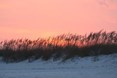 Pink Sunset. In Pensacola, Florida beach with tall grass royalty free stock images