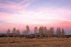 Pink Sunset Aspen Trees. RnrnA pink and mauve sunset Oregon aspen trees and fieldsrnrnrn stock image