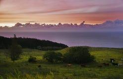 Pink sunset of Big island Stock Photos